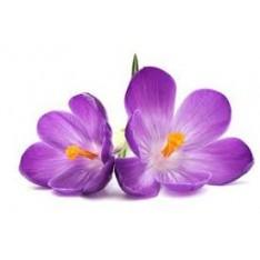 Aceite esencial de Violeta (absoluto)